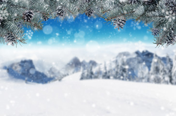 Winter background with fir branches. Free space for text.