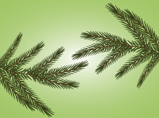 vector realistic spruce branches on a light green background