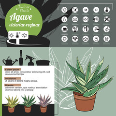 Template for indoor plant Agave. Tipical flowers grown at home and office.