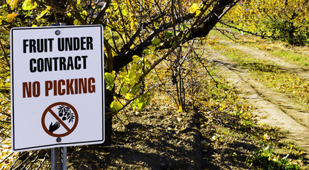 NO PICKING sign at an Cherry orchard