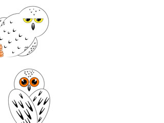 two owls on a white background, sits with his back