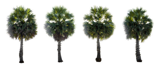 collection Palm For decoration garden isolated on white background
