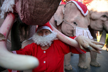 A teacher dressed in a Santa Claus costume poses for a photo with Elephants during Christmas celebrations at Jirasart school in Ayutthaya