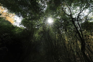 The sun shines through the bamboo forest on the mountain.