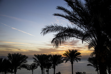 Dawn of the sun by the sea among palm trees