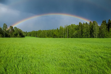 A rainbow over a green grass field