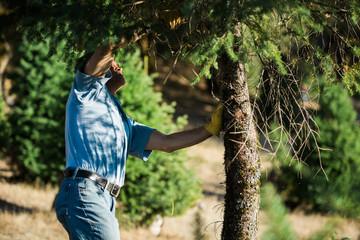 Man preparing tree to saw