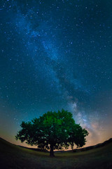Milky way above a lonely tree in a starry night