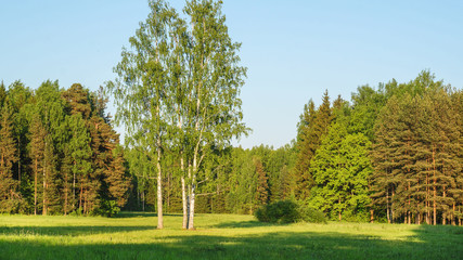 A landscape with greenery and sun.