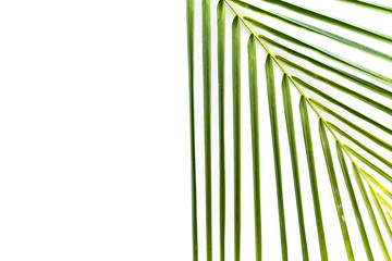 Tropical palm leaf on white background. Flat lay, top view