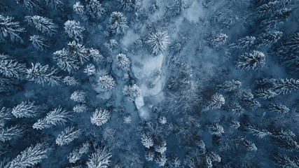 Drone photo of snow covered evergreen trees after a winter blizzard in Lithuania. Wall mural