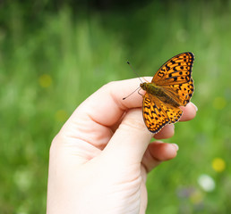 Butterfly sitting on hand on summer nature backround.