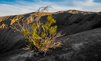 Bush at Ubehebe Crater