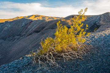 Long Bush at Crater