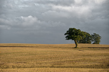 Feld im Herbst - Deutschland