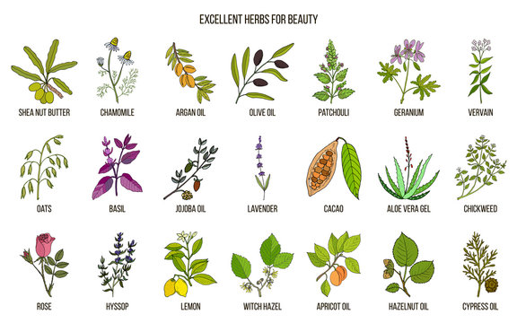 Best herbs for beauty care