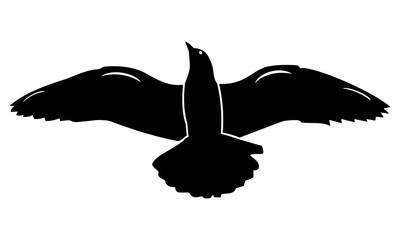 the silhouette of the flying bird looks down