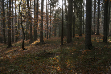 Wald in Kärnten