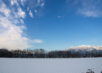 Winter snow covered landscape of bare trees in symmetrical row with Italian Alps in the background in the country of Biella