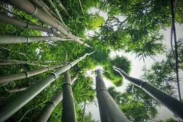 Dusterer Bambuswald Haleakala Nationalpark Maui Buy This Stock