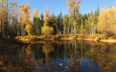 Fall colors around Moose Lake in Northern Idaho