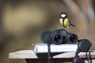 Fototapeta Tit bird with binoculars and ornithology bird field guide book obraz