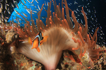 Deurstickers Onder water Underwater coral reef and fish in ocean