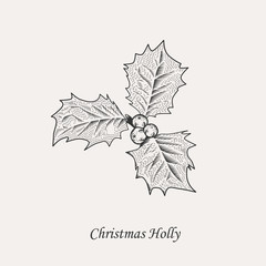 Christmas holly leaves and berries