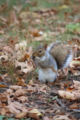 Fototapete - Eichhörnchen