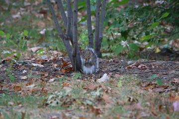 Fotoväggar - Eichhörnchen