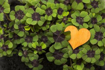 orange Herz in Glücksklee Herz rechts