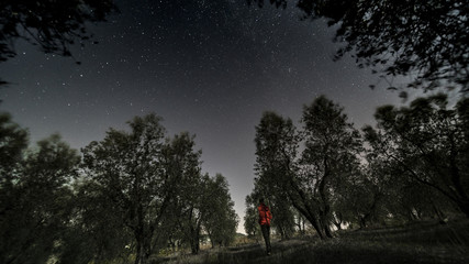 man, stars and olive trees