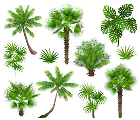 Tropical plants (coconut palm, monstera, fan palm, rhapis). Set of hand drawn vector illustrations on white background.