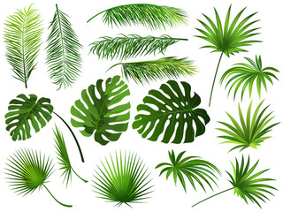 Tropical green  leaves (coconut palm, monstera, fan palm, rhapis). Set of hand drawn vector illustrations of exotic leaves on white background. Wall mural