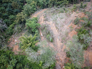 Deforestation. Aerial photo destruction of rainforest. Oil palm plantation industry