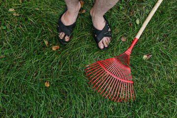 Red rake for harvesting leaves lay on green grass. View from above. The concept of autumn, cleaning, summer residence. Copy space.