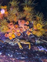 clinging crab at night