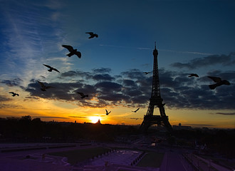 Fototapete - Birds Flying in front of Eiffel Tower: very early morning
