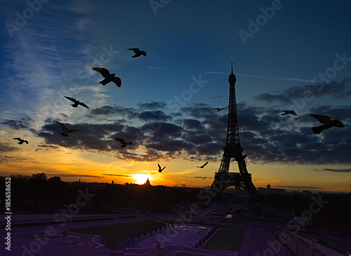 Wall mural Birds Flying in front of Eiffel Tower: very early morning