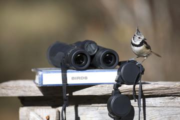 Fototapeta Tit bird with binoculars and ornithology field guide obraz
