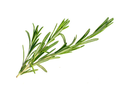 a branch of rosemary