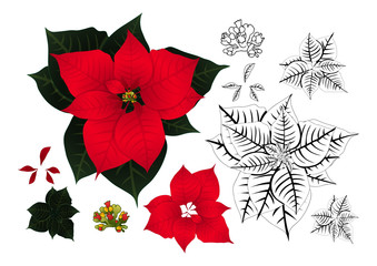 Red Poinsettia Outline