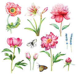 Watercolor collection of hand drawn flowers and butterflies isolated on white background.