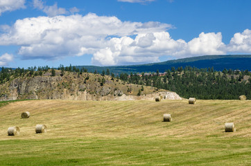 Field with Hay Balls in a Mountain Landscape on a Sunny Spring Day. Okanagan Valley, BC, Canada.