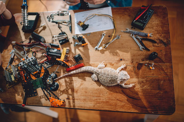 Wall Mural - Lizard on the wooden table with electrical tools