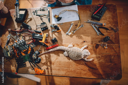 Wall mural Lizard on the wooden table with electrical tools