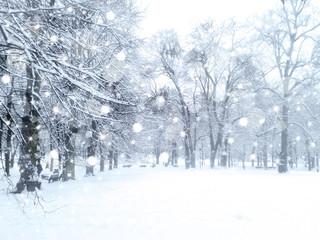 Winter  snowfall landscape. Snowy park.