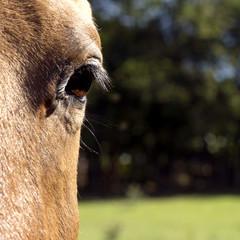 Olhar do Cavalo
