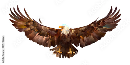 Wall mural drawn sketch colored eagle on a white background