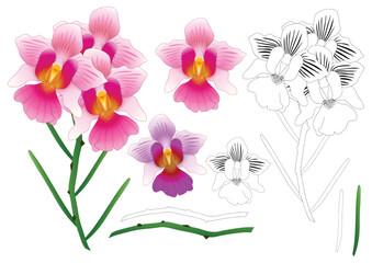 Vanda Miss Joaquim Orchid Outline